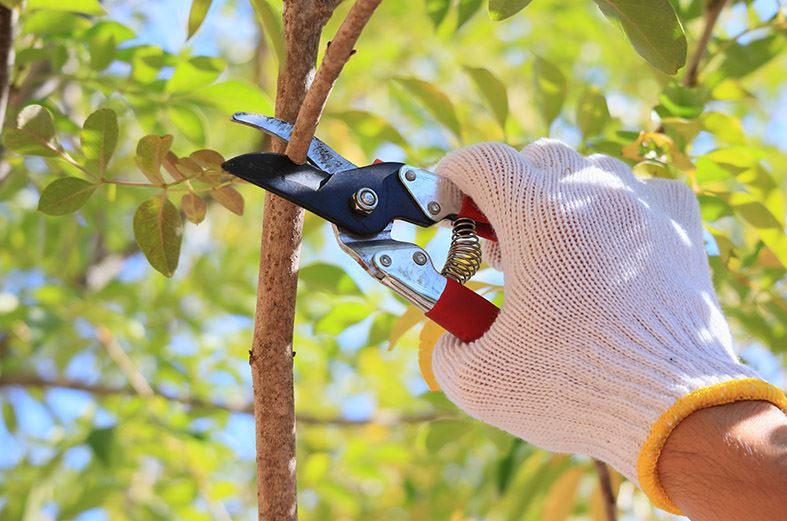 Pruning Your Trees